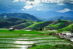 Chiangmai Paddy Field Photographie stock