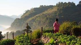 CHIANGMAI TAILÂNDIA - 24 DE DEZEMBRO: um strawbe da plantação do angkhang da menina Fotografia de Stock