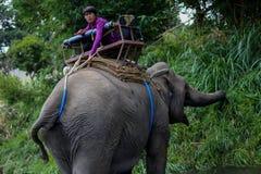 Chiangmai, Thaïlande - 31 mars 2016 : Repos de Mahout sur l'éléphant Photos stock