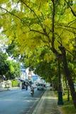 CHIANGMAI, THAILAND-APRIL 30,2019: Banco debajo del ?rbol en los jardines bot?nicos en Chiangmai Tailandia imagenes de archivo