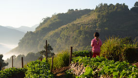 CHIANGMAI THAILAND - 24 DEC: een meisjes angkhang aanplanting strawbe Stock Fotografie