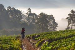CHIANGMAI THAILAND - 24. DEZEMBER: Fotograf, der Foto des Strohs macht Lizenzfreies Stockbild