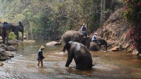 Chiangmai Thailand - 24 Maart, 2019: Olifanten die een bad met mahout in rivier, in Chiang Mai Thailand nemen stock footage