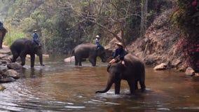 Chiangmai Thailand - 24 Maart, 2019: Olifanten die een bad met mahout in rivier, in Chiang Mai Thailand nemen stock video