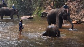 Chiangmai Thailand - 24 Maart, 2019: Olifanten die een bad met mahout in rivier, in Chiang Mai Thailand nemen stock videobeelden