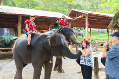 Chiangmai, Thailand - November 16: mahouts berijd olifanten en begroet vreemdeling op 16 November, 2014 bij Mae Sa-olifantskamp,  royalty-vrije stock fotografie