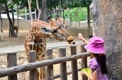 Chiangmai-Zoo Stockfoto