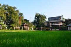 Chiangmaien för risfältfält Fotografering för Bildbyråer