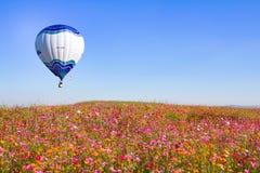 CHIANGRAI,泰国- 2015年11月29日:在桃红色花波斯菊农厂节日的热空气气球在Chiangrai,泰国 免版税库存照片