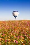 CHIANGRAI, TAILÂNDIA - 29 DE NOVEMBRO DE 2015: Balão de ar quente sobre o festival cor-de-rosa da exploração agrícola do cosmos d Fotos de Stock