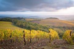 Chianti地区,托斯卡纳,意大利 葡萄园在秋天 图库摄影