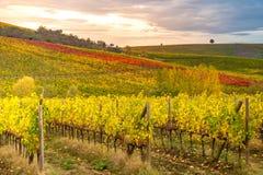 Chianti地区,托斯卡纳,意大利 葡萄园在秋天 库存照片
