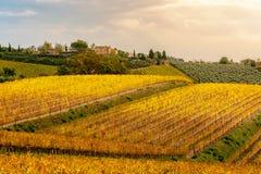 Chianti地区,托斯卡纳,意大利 葡萄园在秋天 免版税库存图片