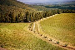 Chianti葡萄园在托斯卡纳,意大利 免版税图库摄影
