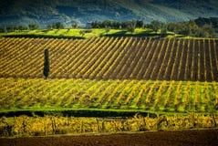 Chianti葡萄园在托斯卡纳,意大利 库存图片