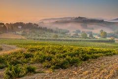 年轻Chianti葡萄园在托斯坎乡下,意大利 免版税库存照片