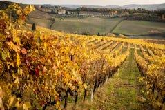 Chianti葡萄园的秋天颜色在锡耶纳和佛罗伦萨之间的 意大利 库存照片