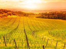 Chianti葡萄园  在美好的托斯坎风景,意大利的温暖的日落 库存照片