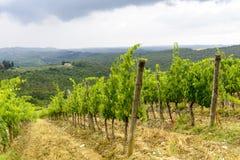 Chianti, Тоскана Стоковые Изображения