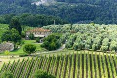 Chianti, Тоскана Стоковые Фотографии RF