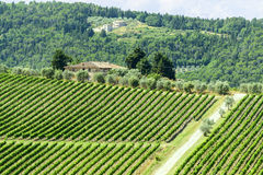 Chianti, Тоскана Стоковая Фотография