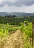 Chianti, Тоскана стоковое изображение