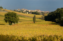 Chianti Stock Photography