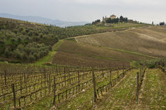 Chianti. Countryside and wineyard in Chianti, Tuscany, Italy royalty free stock photography