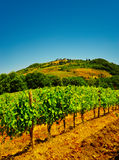 Chianti. Hill Of Tuscany with Vineyard in the Chianti Region royalty free stock photography
