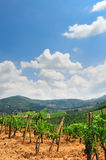 Chianti. Hill Of Tuscany with Vineyard in the Chianti Region stock photos