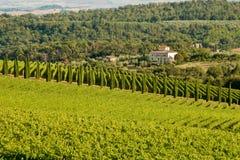 Chianti classico Panorama Stockbild
