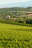Chianti classico view Royalty Free Stock Photos