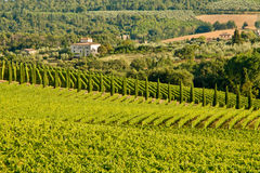 Chianti classico view. Typical view in chianti shine Royalty Free Stock Images