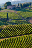 Chianti classico view. Typical view in chianti shine Royalty Free Stock Image
