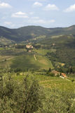 Chianti countryside. Vineyards in the Chianti countryside royalty free stock images