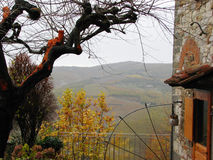 Chianti Countryside. The Tuscan Chianti countryside through a tree royalty free stock photos