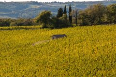 Chianti de vignoble photos libres de droits