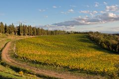 Chianti de vignoble photographie stock