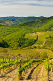 Chianti Royalty Free Stock Photos