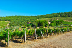 Chianti. Hill of Tuscany with Vineyard in the Chianti Region stock image