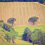 Chianti. Hill of Tuscany with Vineyard in the Chianti Region, Instagram Effect royalty free stock image