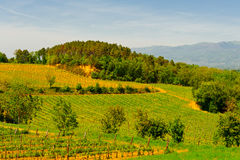 Chianti. Hill of Tuscany with Young Vineyard in the Chianti Region royalty free stock photo