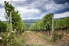 Chianti hills with vineyards. Tuscan Landscape between Siena and Florence. Italy royalty free stock photography