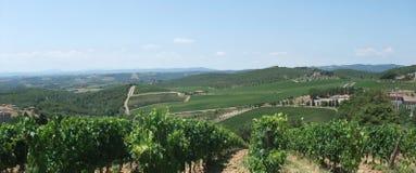 Chianti i Tuscany arkivbilder