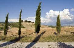 chianti krajobrazu Zdjęcie Royalty Free