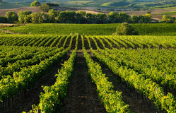 Chianti Landscape Royalty Free Stock Photography