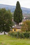 Chianti Landscape Stock Image