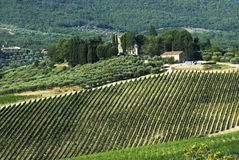 Chianti landscape. Typical Chianti landscape with vineyards and cypresses stock photography