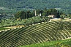 Chianti landscape Stock Photography