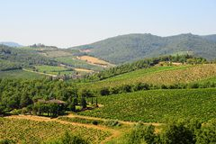 Chianti Region. Hill Of Tuscany With Vineyard In The Chianti Region stock photos
